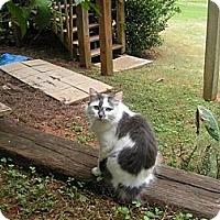 Adopt A Pet :: *Bunny - Winder, GA