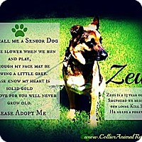 Adopt A Pet :: Zeus - Naples, FL