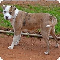 Adopt A Pet :: Kora - Athens, GA