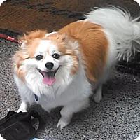 Adopt A Pet :: Molly - Gig Harbor, WA