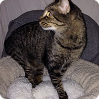 Adopt A Pet :: Windy - Simpsonville, SC