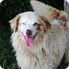 Adopt A Pet :: SANTANA BLUE