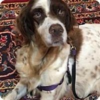 Adopt A Pet :: CHELSEA - Pine Grove, PA