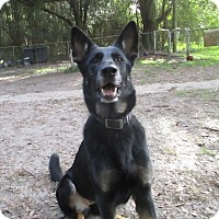 Adopt A Pet :: Rosie - Green Cove Springs, FL