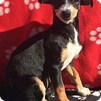 Adopt A Pet :: Ellie Mae - Alta Loma, CA