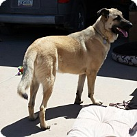 Adopt A Pet :: Moose - Scottsdale, AZ