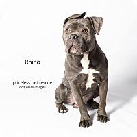 Adopt A Pet :: Rhino - Claremont - Chino Hills, CA