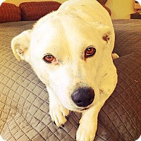 Adopt A Pet :: Bubbles! - Los Angeles, CA