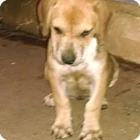 Adopt A Pet :: Marta - Greensboro, GA
