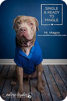 Mastiff Mix Dog for adoption in Cranford, New Jersey - Mr. Magoo