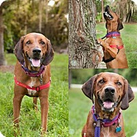Adopt A Pet :: Mick - Clearwater, FL