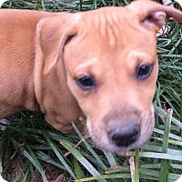 Adopt A Pet :: Pumpkin  (ETAA) - Harrisonburg, VA