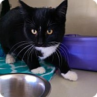 Adopt A Pet :: Pickle - Fort Collins, CO