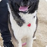 Adopt A Pet :: Falcor - Romoland, CA