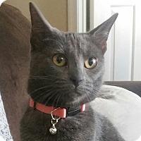 Adopt A Pet :: Cinna - Germantown, MD