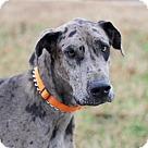 Adopt A Pet :: AMOS