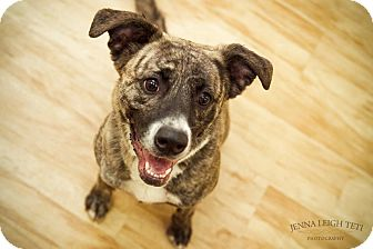 Sadie Hawkins | Adopte...