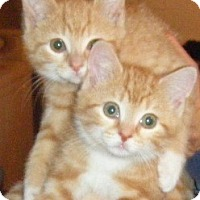 Adopt A Pet :: Buttercup & Millie - Kensington, MD