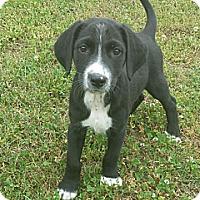 Adopt A Pet :: Griffin - Allentown, PA