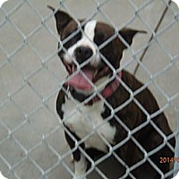Adopt A Pet :: Allie - Freedom, PA