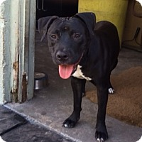 Adopt A Pet :: Perone - Hollywood, FL