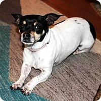 Adopt A Pet :: Gigi - Houston, TX