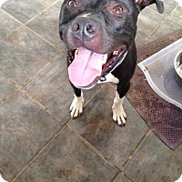 Adopt A Pet :: Wilbur - Dayton, OH