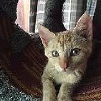 Adopt A Pet :: Gwendolyn - La Canada Flintridge, CA