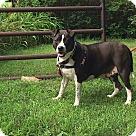 Adopt A Pet :: Echo