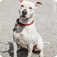 Adopt A Pet :: Ester - Kansas City, MO