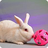 Adopt A Pet :: Courtland - Marietta, GA