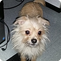 Adopt A Pet :: GREMLIN - Sandusky, OH