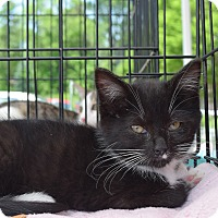 Adopt A Pet :: Chloe - Washington, PA