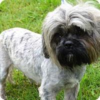 Adopt A Pet :: Pip - Brunswick, ME