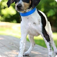 Adopt A Pet :: Murphey - Waldorf, MD