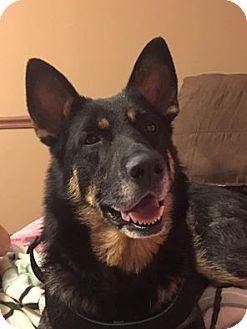 German Shepherd Dog Dog for adoption in Mission, Kansas - Pastilla