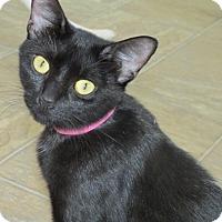 Adopt A Pet :: HELENA - Aiken, SC