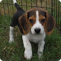 Adopt A Pet :: Jasper and friends - Venice, FL