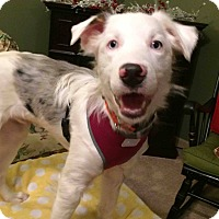 Adopt A Pet :: Thorn - New Oxford, PA