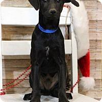 Adopt A Pet :: Lakota - Waldorf, MD