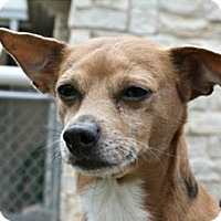 Adopt A Pet :: Snoopy - Richland Hills, TX