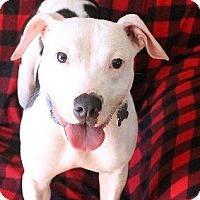 Adopt A Pet :: Maxwell - Ocala, FL