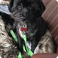 Adopt A Pet :: Buddy - Encino, CA