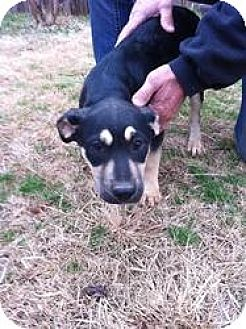 Pit Bull Terrier/Terrier (Unknown Type, Medium) Mix Dog for adoption in Blanchard, Oklahoma - Yukon