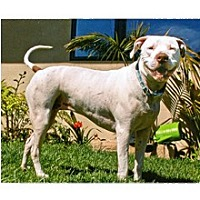 Adopt A Pet :: Shelby - Santa Barbara, CA