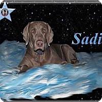 Adopt A Pet :: Sadie - Berthierville / Sorel, QC