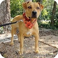 Adopt A Pet :: Maizey - Hop Bottom, PA