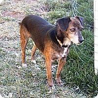 Adopt A Pet :: PILOT - Torrance, CA