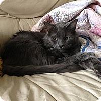 Adopt A Pet :: Nick - Harvey, LA