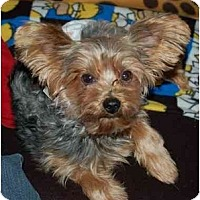 Adopt A Pet :: Bug - Columbia, SC